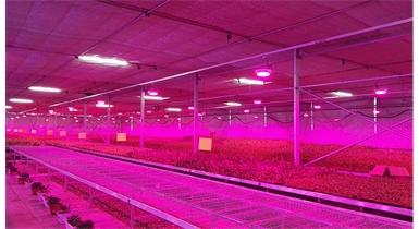 植物补光系统