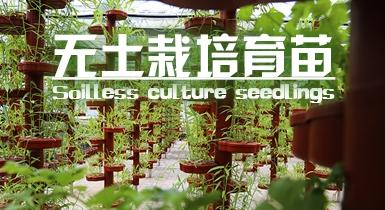 无土栽培育苗