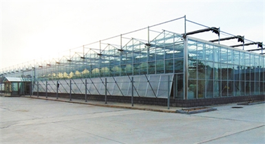 石拐区环境修复植物资源开发工程智能内bobappios下载地址玻璃温室项目