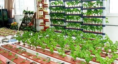 家庭园艺生产设备与技术